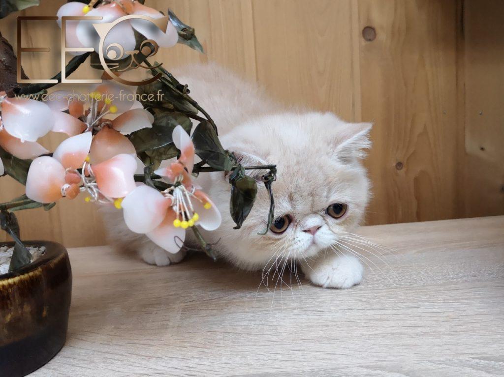 Dating site cat nostalgie fr Site ul de intalnire Reunion tropical